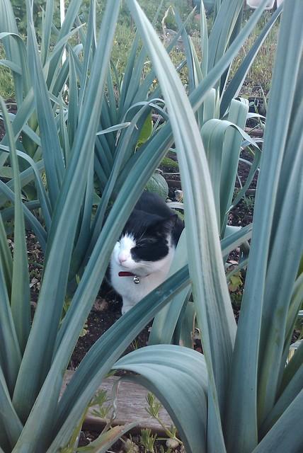 Tiny Cat, Giant Leeks