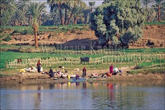 10040032 (wolfgangkaehler) Tags: africa people river northafrica african egypt nile wash laundry rivers dailylife riverbank luxor washing riverbanks localpeople washingclothes nileriver dendera luxoregypt africanriver peopleworldwide denderaegypt africanrivers