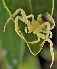 Flower Spider (PhotoGrapherQ80 KWS) Tags: macro closeup micro adel abdeen
