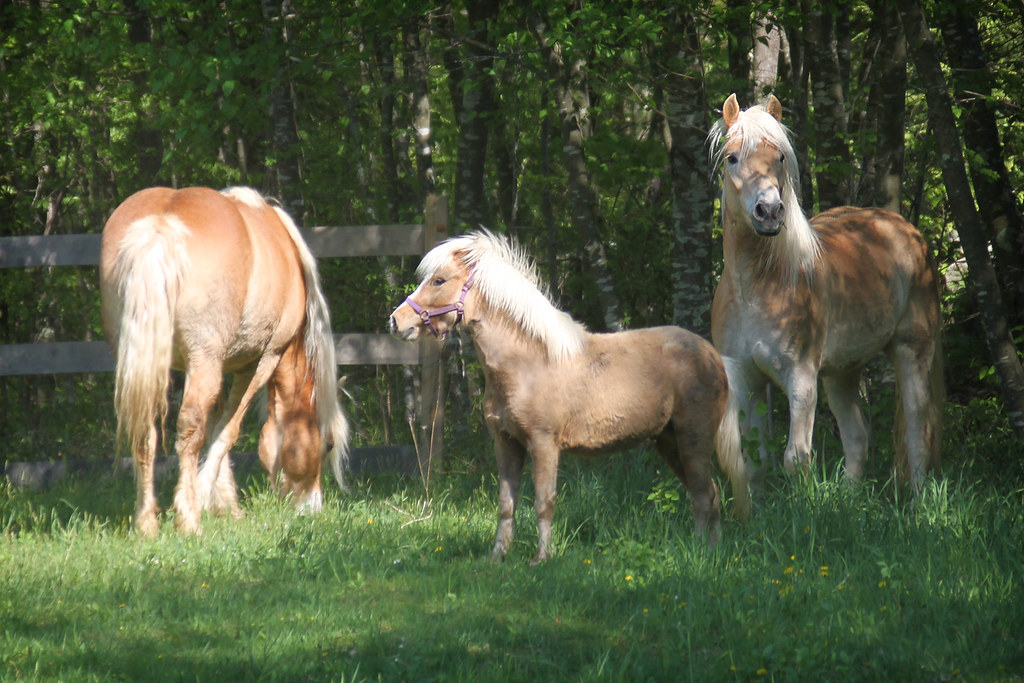 horses 163x