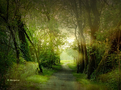 ..toward the light... (MargoLuc) Tags: texture landscape parcodellecave idream platinumheartaward awardtree artistictreasurechest bestofmywinners magicunicornverybest magicunicornmasterpiece