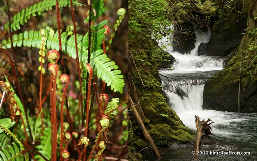 Quinault Rain Forest, WA