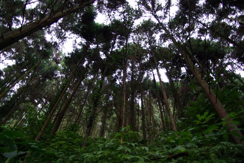 20100509雨後山徑