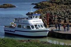 May Princess (AMKs_Photos) Tags: sea bird nature birds animal canon photography eos scotland boat princess may reserve forth isle anstruther seabird firth isleofmay amk rspb 450d mayprincess amksphotos