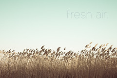 ~ fresh air. (CarolynsHope) Tags: blue light sky grass freshair weeds weed air calming peaceful calm fresh minimal clean simplicity serenity dreamy serene minimalism breathe breeze simple refreshing breezy renewal airy renew beachgrass simplistic