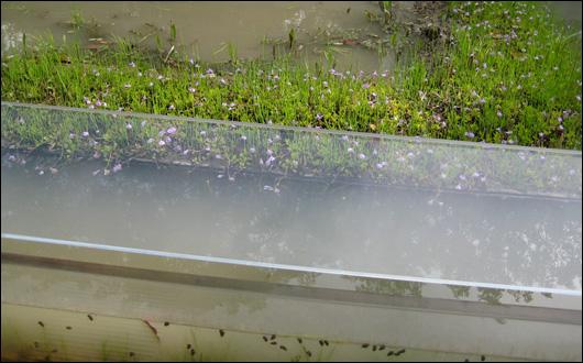 葛西臨海水族園 淡水生物館