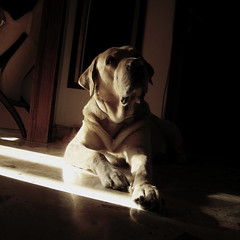 Dee.light (dangeri.) Tags: dog loving labrador athome doc doggie perrito musetto coth thelittledoglaughed heismylove doggielife magicunicornverybest coth5 magicunicornmasterpiece ourdailylife myyellowlabrador