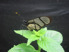 Butteryfly museum live exhibit