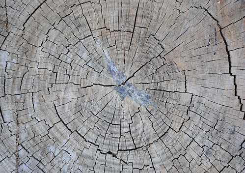 6 Free Textures: High-Res Wood & Bark