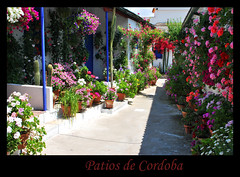 Patios (Clara Bon) Tags: flowers flores spain terrace cordoba patios flickrshop