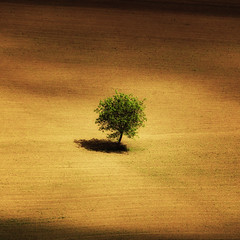 A tree's a tree (David (UK) - Gone) Tags: france tree field dordogne soil domme phoughed
