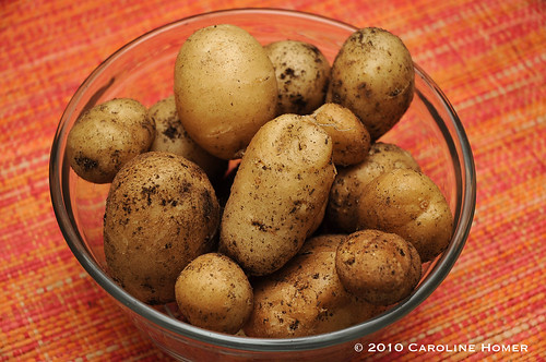 Homegrown Kennebec potatoes