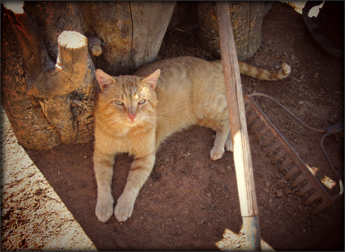 king kitten
