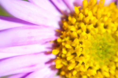 Flower Macro 7