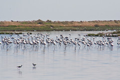 IMG_3082 (elkost) Tags: birds kalochori