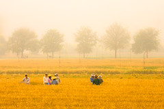[ impressionism ] ([ chang ]) Tags: panorama nature field yellow painting landscape thailand cornfield tailandia son natura quadro hong giallo impressionism campo mae farmer thailandia vangogh pang grano pittura impressionismo   agricoltori agricoltore ratchaanachakthai mapha  wwwriccardoromanocom