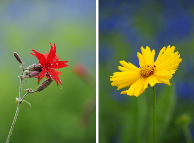 Wildflower Diptych