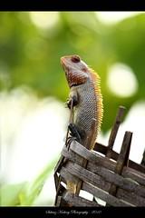 Garden Beauty (ID PLEASE) (suhaaz Kechery) Tags: india photography kerala dk canon450d kechery suhaaz sigma150500dgapoos