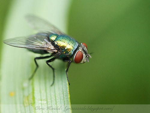 House Fly 2