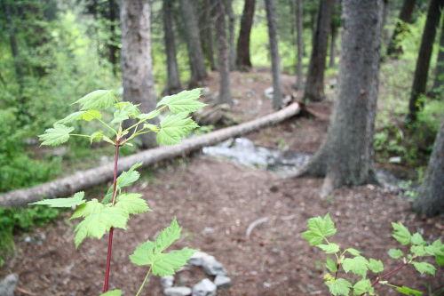 Leaf and Creek