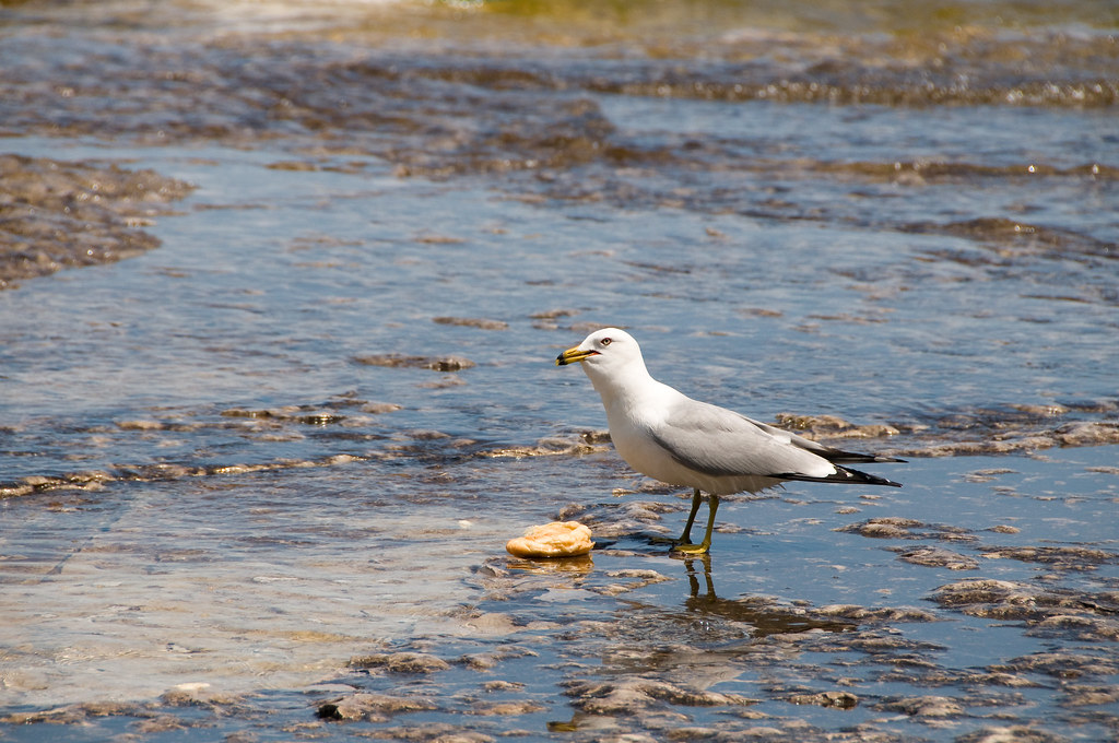 The Seagull who stole our food