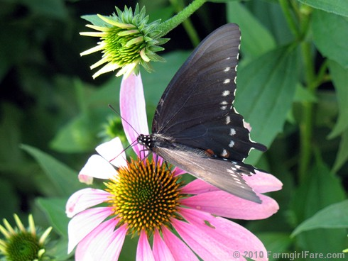 Attracting Pollinators 4