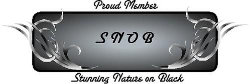 SNOB Badge
