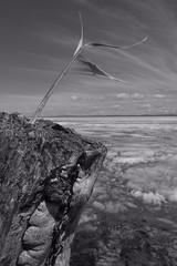 Lake Khuvsgul