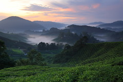 sungai palas tea plantation (ChR!s H@rR!0t) Tags: mist sunrise highlands cameron sungai palas