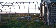 Maggie's Farm - Kiel, WI
