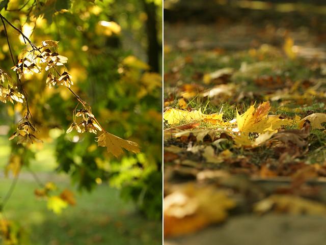 Napsütötte október