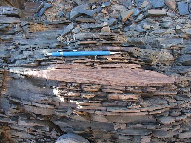Ripple-laminated sand encased in siltstone