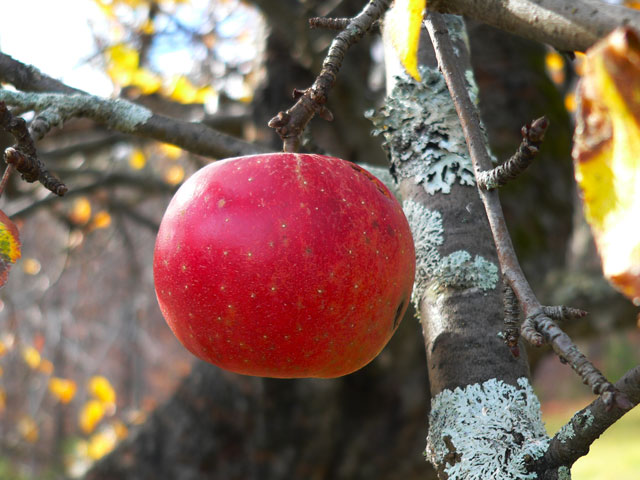last_apple