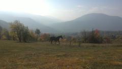 Hiddden place (Yohan92) Tags: bulgaria photo canon world beautiful wild relax summer hidden hourse