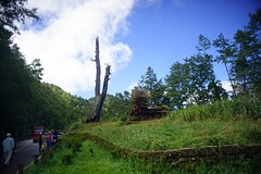 DSC07859 (rc90459) Tags: 最後的夫妻樹 夫妻樹 塔塔加 玉山
