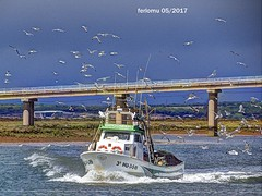 Huelva 05 Acoso (ferlomu) Tags: andalucia ave barco ferlomu huelva mar odiel rio
