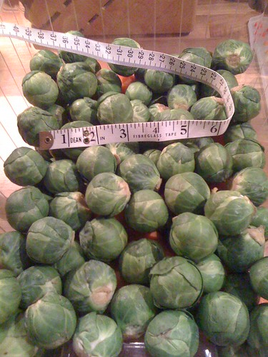 Brussels Sprouts (the measured version)