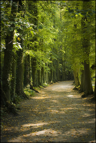 Forest path in Poland