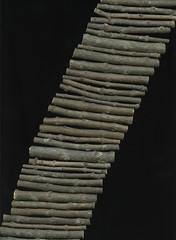23245 Chionanthus virginicus (horticultural art) Tags: sticks diagonal horticulture cuts chionanthusvirginicus horticulturalart