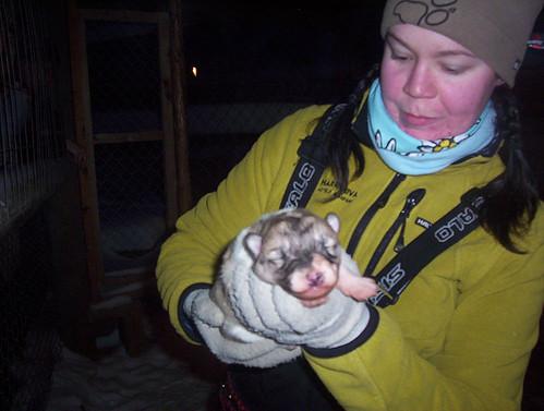5 Tage altes Husky Baby