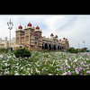 Mysore. (sash/ slash) Tags: city travel flowers tourism palace karnataka mysore southindia sajesh