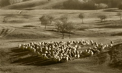 260 Sheep in Bashang grassland--China (ngchongkin) Tags: china sheep photos splash grassland bashang nationalgeographic themoulinrouge favoritephotos fotoclub nikond200 objectiveart aboutyou flickrsbest superphotographer theworldinmyeyes photopassion loveforphotography diamondheart peaceaward avpa flickrhearts flickraward flickrbronzeaward throughoureyes heartawards eperkeaward betterthangood flickridol earthasia thebestshot highqualityimages discoveryphotos 469photographer grouptripod colorsofthesoul photographerparadise artofimages angelawards picturelovers ablackrose flickrsgottalent atyourbest unicornawards bishopsandpawns kingdomphotography mostinterestingshot fireworksofphotos fabulousplanetevo 2heartsaward flickrbronzetrophy mygearangme photographyforrecreationbronzeaward groupclosedtrollalert letscleanexplore highqualityimagequaifiedmembersonly