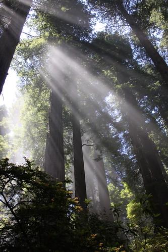 Redwoods State Park, CA