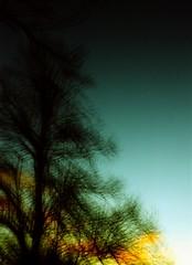 Sunset before winter (.scribe) Tags: sunset sky tree 120 silhouette vintage mediumformat xpro crossprocessed fuji multipleexposure velvia boxcamera ensign fromfilm fujivelvia50 velvia50 fujivelvia 214b ensign214b