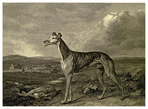 021-Galgo-The sportsman's repository 1845- John Scott