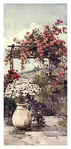 011- Enredadera de rosas en Santa Lucia Madeira-The flowers and gardens of Madeira - Du Cane Florence 1909