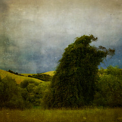 Ent (borealnz) Tags: trees newzealand tree green texture grass rural river square sheep vine hills nz otago creeper willows ent clutha bsquare cluthariver flypapertextures borealnz