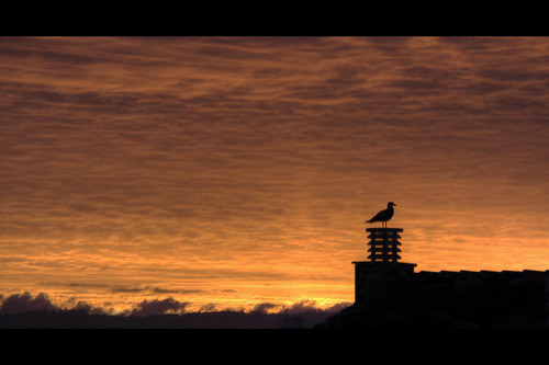 Páharo!!! / Seagull dawn