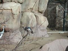 Zoo of Denver  DSCN0021
