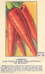 legume11 carotte